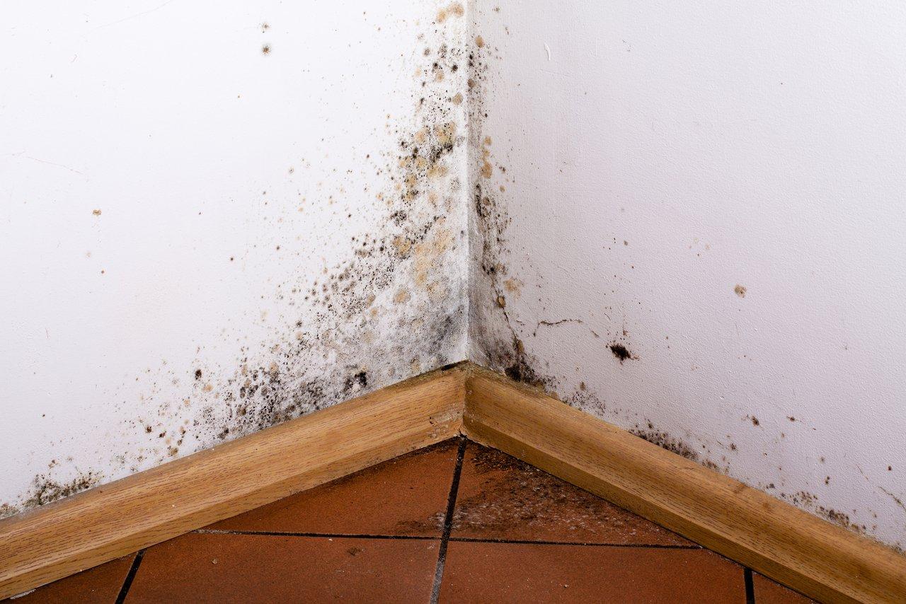 Feuchte Wände? Wir helfen bei Ursachensuche und Sanierung ...
